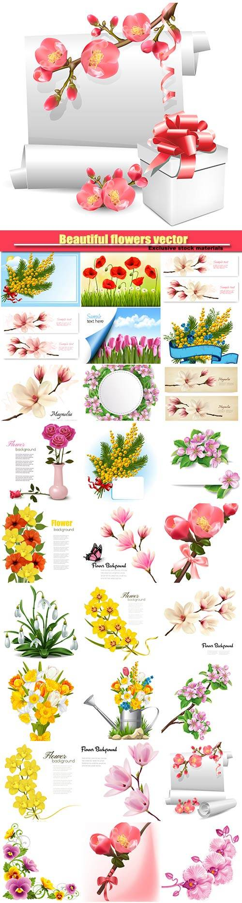 Beautiful flowers vector, daffodils, orchids, magnolia, spring flowers